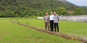 Karabük'te çeltik ekimi başladı