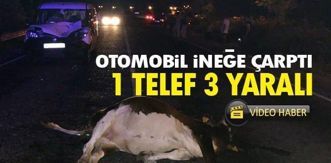 Otomobil ineğe çarptı: 1 TELEF 3 YARALI