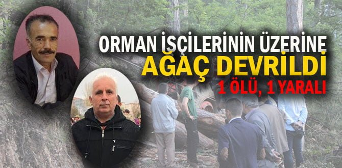 Orman işçilerinin üzerine ağaç devrildi: 1 ölü, 1 yaralı