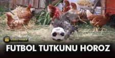 Futbol tutkunu horoz