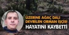 Üzerine ağaç dalı düşen orman işçisi hayatını kaybetti