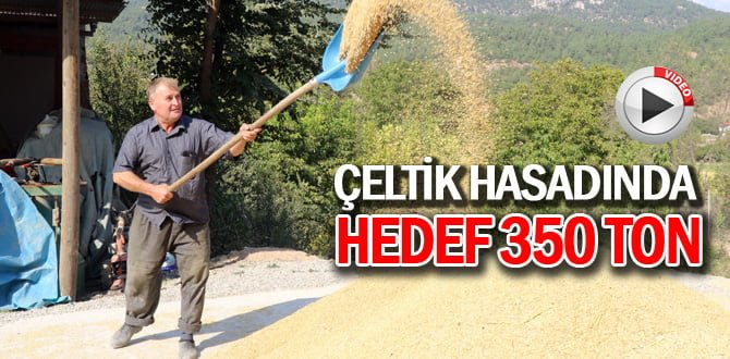 """""""Çeltik hasadı""""n da hedef 350 ton"""