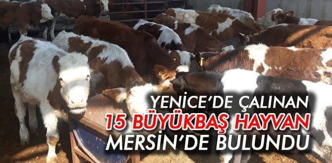 YENİCE'DE ÇALINAN HAYVANLAR MERSİN'DE BULUNDU